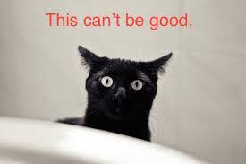 blackcatskeered